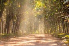 Landwirtschaftliche Straße im Wald Stockbild