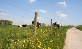 Landwirtschaftliche Szene Lizenzfreie Stockfotografie