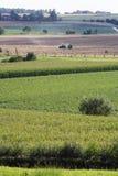 Landwirtschaftliche Szene Stockfoto