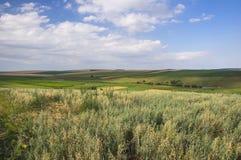 Landwirtschaftliche Szene Lizenzfreie Stockfotos