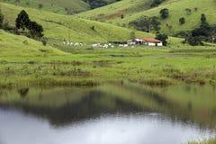 Landwirtschaftliche Szene Lizenzfreies Stockfoto