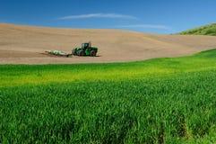 Landwirtschaftliche Szene des Weizenfeldes stockfoto