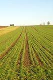 Landwirtschaftliche Szene, Deutschland Stockfotografie