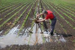 Landwirtschaftliche Szene, Landwirt auf dem Paprikagebiet mit Bewässerungssystem Lizenzfreie Stockfotos
