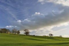 Landwirtschaftliche Szene mit dem Weiden lassen der Schafe Stockfotos