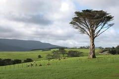 Landwirtschaftliche Szene Neuseeland stockfotos