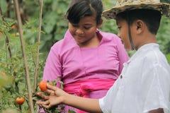 Landwirtschaftliche Tätigkeiten Permaculture-Erfahrungen bei Desa Visesa Stockfotos