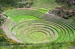 Landwirtschaftliche Terrassen im Moray, Peru Lizenzfreie Stockfotos