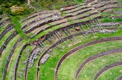 Landwirtschaftliche Terrassen im Moray, Peru Stockbild