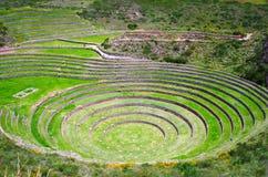 Landwirtschaftliche Terrassen im Moray, Peru stockbilder