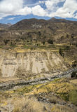 Landwirtschaftliche Terrassen und Colca-Fluss Arequipa, Peru Stockbild