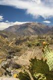 Landwirtschaftliche Terrassen und Colca-Fluss Arequipa, Peru Lizenzfreies Stockfoto