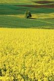 Landwirtschaftliche Vergewaltigung der Landschafts-Schweiz Aargau Mandach lizenzfreie stockbilder