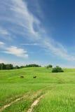 Landwirtschaftliche Weide Stockfoto