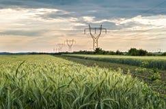 Landwirtschaftliche Weizenfelder stockfotos