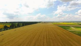 Landwirtschaftliche Weizenfelder gegen den blauen Himmel stock video
