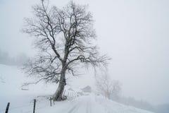 Landwirtschaftliche Winterlandschaft Stockfoto
