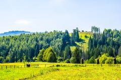 Landwirtschaftliche Wirklichkeit in Ukraine Lizenzfreie Stockfotos
