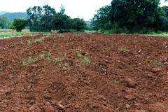 Landwirtschaftlicher Bauernhof, Reihe auf einem gepflogenen Gebiet bereitete sich vom Boden für pl vor Lizenzfreies Stockbild