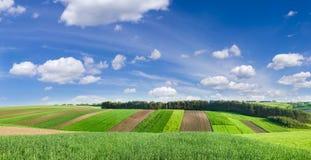 Landwirtschaftlicher Boden auf dem Hintergrund des Waldes und des Himmels Lizenzfreie Stockfotografie