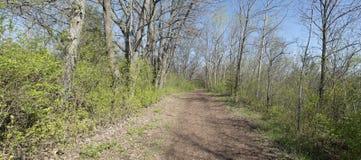 Landwirtschaftlicher Holz-Straßen-Pfad panoramisch, Panorama-Fahne Stockfoto
