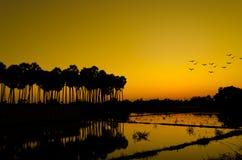 Landwirtschaftlicher Sonnenuntergang Lizenzfreie Stockfotografie