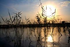 Landwirtschaftlicher Teich am Sonnenuntergang Stockfotos