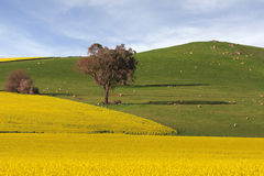 Landwirtschaftliches Ackerland Stockfoto