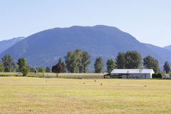 Landwirtschaftliches Ackerland im Fraser Tal Stockfotos