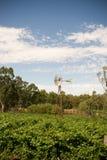 Landwirtschaftliches Australien stockfotografie