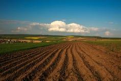 Landwirtschaftliches blühen grüne und gelbe Feldfrüchte auf blauem Himmel und Wolken stockfotografie