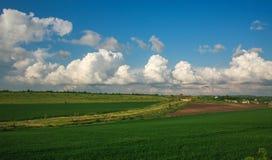 Landwirtschaftliches bl?hen gr?ne und gelbe Feldfr?chte auf blauem Himmel und Wolken lizenzfreies stockfoto