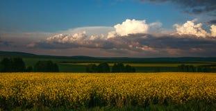 Landwirtschaftliches bl?hen gr?ne und gelbe Feldfr?chte auf blauem Himmel und Wolken lizenzfreie stockbilder