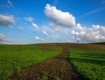 Landwirtschaftliches bl?hen gr?ne und gelbe Feldfr?chte auf blauem Himmel und Wolken stockbild