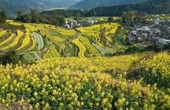 Landwirtschaftliches Dorf Stockfoto