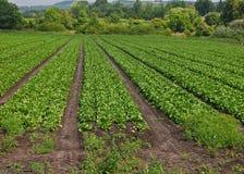 Landwirtschaftliches England Lizenzfreie Stockfotos