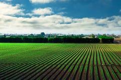 Landwirtschaftliches Feld Stockfotografie