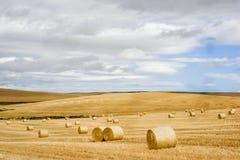 Landwirtschaftliches Feld Lizenzfreie Stockfotografie
