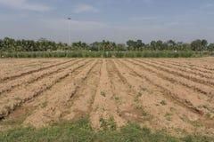 Landwirtschaftliches Feld Stockfotos