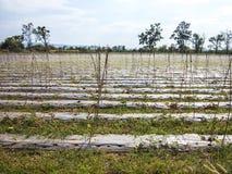 Landwirtschaftliches Feld lizenzfreie stockbilder