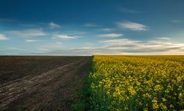 Landwirtschaftliches Feld blühender Canola mit leerem Boden auf Wolken des blauen Himmels stockfotografie
