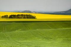 Landwirtschaftliches Feld - Boden Stockfotografie