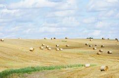 Landwirtschaftliches Feld des Herbstes Lizenzfreies Stockfoto