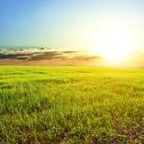 Landwirtschaftliches Feld am frühen Morgen lizenzfreies stockbild