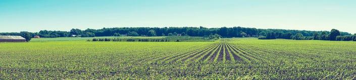 Landwirtschaftliches Feld mit Ernten auf einer Reihe Stockfotos