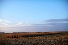 Landwirtschaftliches Feld mit teils geerntetem Mais Lizenzfreie Stockfotos