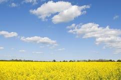 Landwirtschaftliches Feld von Raps mit netten Wolken Lizenzfreies Stockbild