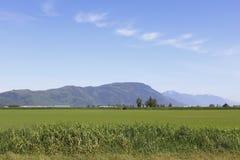 Landwirtschaftliches Fraser Tal Lizenzfreie Stockfotografie