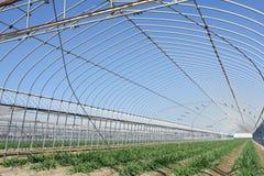 Landwirtschaftliches Gebäude für die Landwirtschaft Lizenzfreie Stockfotografie