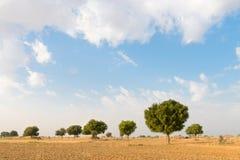 Landwirtschaftliches gepflogenes Landfeld in der Wüste Lizenzfreies Stockfoto